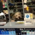たばこ屋の犬